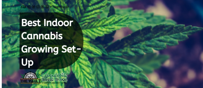 Beginners Indoor Cannabis Growing Set-Up