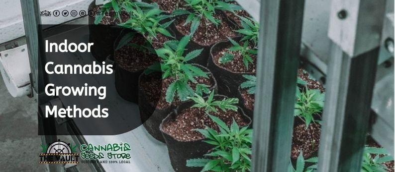 Indoor Cannabis Growing Methods