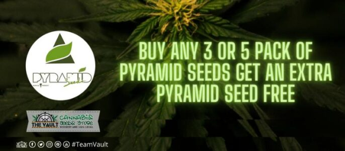 Buy Any 3 or 5 Pack of Pyramid Seeds and Get an Extra Pyramid Seed Free