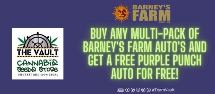 Barney's Farm Purple Punch AUTO Promo – Buy, 3,5 or 10 Get 1 Free