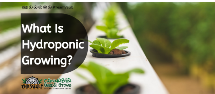 What Is Hydroponic Growing