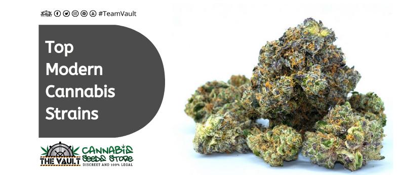 Top Modern Cannabis Strains