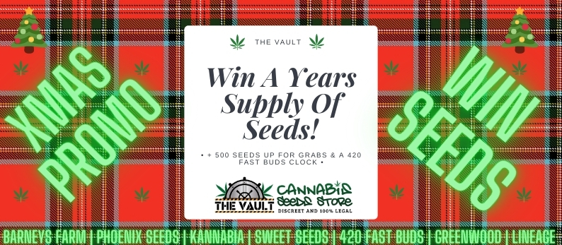 Vault Cannabis Xmas Seeds