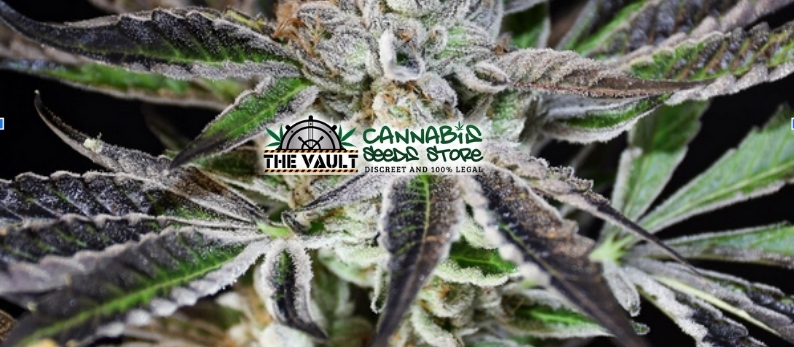 The Vault Cannabis Seed Store Feminised Seeds