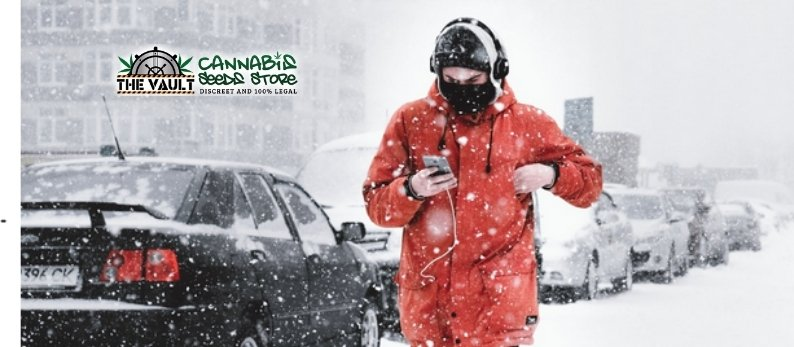 Top Strains For Snow Storms