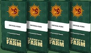 critical-kush_packet_1_seed
