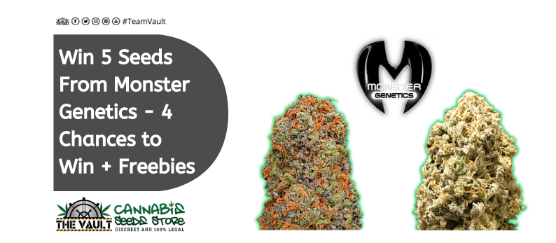 The Vault Cannabis Seed Store Monster Genetics
