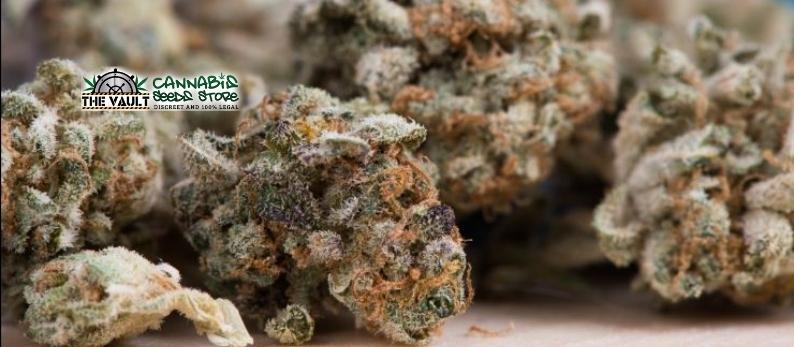 sweet-cannabis-strains