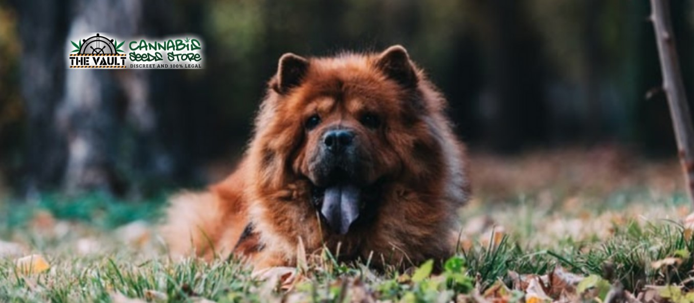 If Strains of Weed Were Dogs