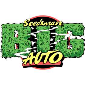 b i g auto feminised seeds seedsman