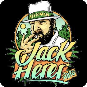 jack herrer auto feminised seeds seedsman