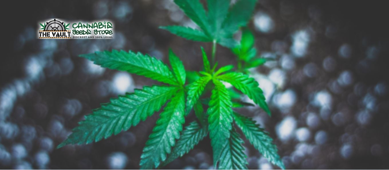 Common Issues When Growing Weed