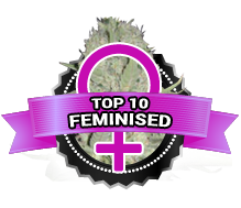 Top 10 Feminised Cannabis Seeds