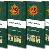 Runtz  Muffin  Packet 1  Seed