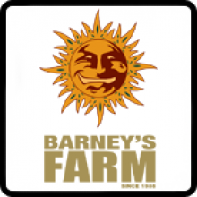 Barneys Farm Cannabis Seeds