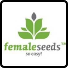 Female Seeds Cannabis Seeds