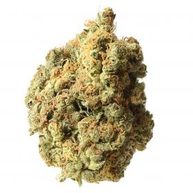A K 020  Grown  From  Amsterdam  Genetic  Cannabis  Seeds