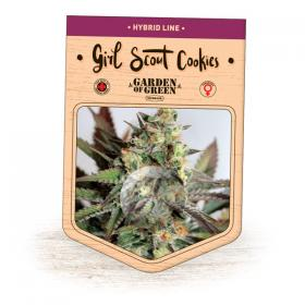 Girl  Scout  Cookies  Feminised  Cannabis  Seeds  Jpg