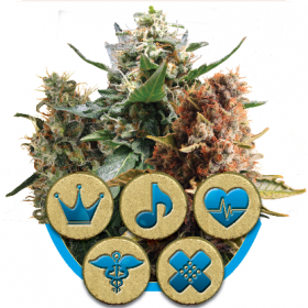 Mix  C B D  Feminised  Cannabis  Seeds  Jpg