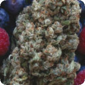 Hashberry Regular Seeds