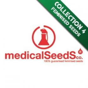 Collection 4  Feminised Seeds