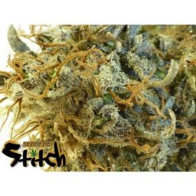Stitch's Love Potion Autoflowering Feminised Seeds