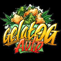 Gelat  O G  Auto  Feminised  Cannabis  Seeds