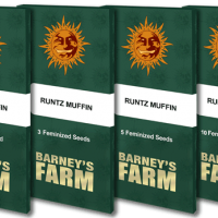 Runtz  Muffin  Packet 1  Seed
