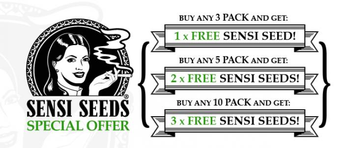 Offer  Banner  Sensi  Cannabis  Seeds