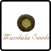 Mandala Seeds Cannabis Seeds