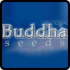 Buddha Seeds Cannabis Seeds