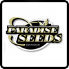 Paradise Seeds Cannabis Seeds