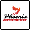 Phoenix Seeds Cannabis Seeds